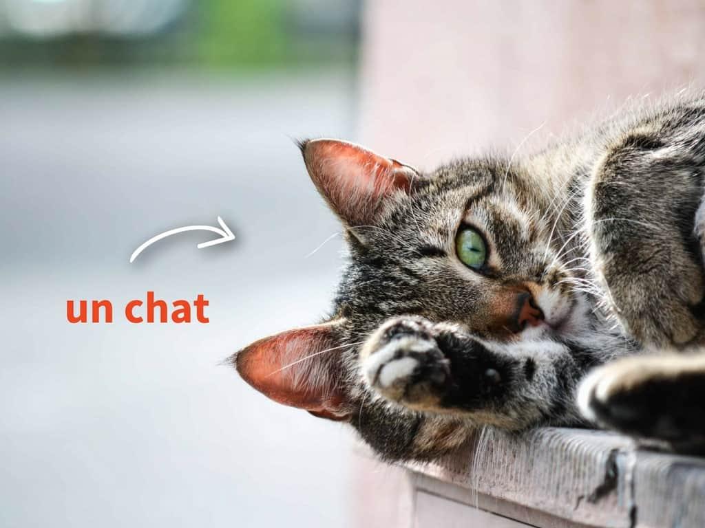 un chat - Brigade Web